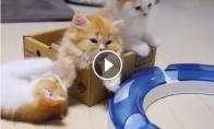 Mažas kačiukas nori žaisti