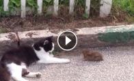Katinas vaikosi kiškutį
