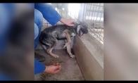 Skriaustas šunelis nesupranta, kad žmones nenori jam nieko blogo