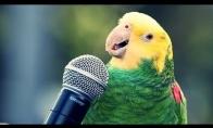 Papūga dainuoja Sia - Chandellier