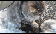 Prišalusio katiniuko gelbėjimas