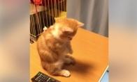Mažas katukas džiaugiasi virtualiomis žuvytėmis