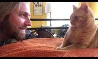 Saldus kerštas katinui