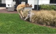 Katė nindzė išvengia atakos
