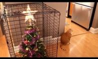 Kaip pasipuošti Kalėdoms, kai namie augini katę