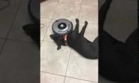 Labai tingus šunelis