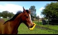 Naujas arklio žaislas