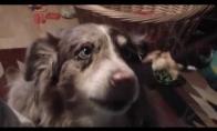 Šuniukas bando kalbėti