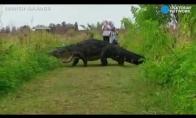 Dinozaurai išliko iki šių dienų?