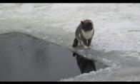 Katiniukas žvejys