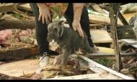 Šuo atsiranda iš griuvėsių po tornado