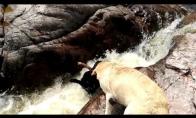 Šuo išgelbsti savo draugą