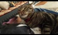Pati kantriausia katė pasaulyje