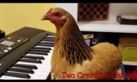 Muzikalus viščiukas