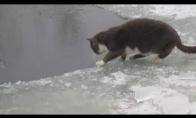 Katinas žūklės meistras
