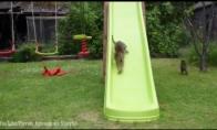 Kačiukai žaidžia ant čiuožyklos