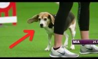 Lengvai išblaškomas šunelis