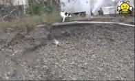 Katė gelbėtoja