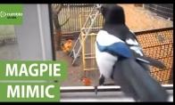 Besijuokiantis paukštis