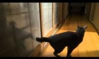 Katė beldžias kaip kulkosvaidis