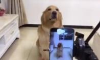 Šuo šypsosi kamerai