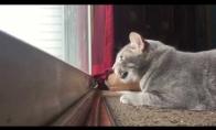 Katė bando balsu prisivilioti paukščius