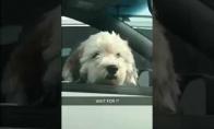 Mergina pamato šunį