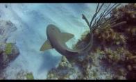 Naras ištraukia peilį rykliui iš galvos