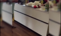Šuniukas laukia žaislo