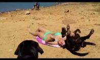 Kodėl nepatartina vestis šunų į paplūdimį?