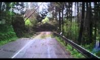 Kai užpuola pikti medžiai