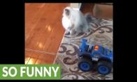 Katiniuko transportavimas