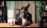 Šuo valgo kaip žmogus