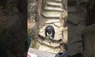 Šimpanzė appšūdino močiutę
