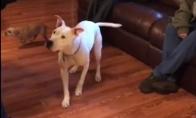 Šunį užgliūčina telefono šviesa