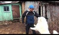 Kaimiečio dirbtuvės: Šuns būda