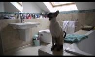 Susirūpinusios katės duše