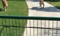Dideli katukai pasiilgo savo draugės
