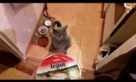 Šita katė suėstų viską