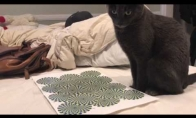 Kačiukas prieš optinę apgaulę