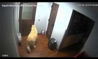 Šuns pabėgimas iš gyvūnų prieglaudos