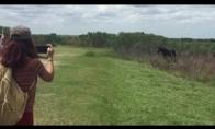 Žirgas užpuola krokodilą