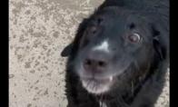 Šuo nenori eiti namo
