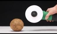Ar popierius gali perpjauti kokosą?