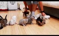 Kaip sunku į vieną vietą sudėti 10 kačiukų