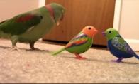 Papūgai nepatinka žaisliniai paukščiai