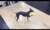 Šunelis išbando savo naujus batus
