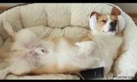 Ką veikia šunys, likę vieni namuose