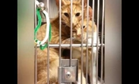 Katinas guodžia savo sesutę pas veterinarą