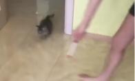 Kačiukas voras